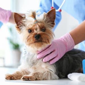 Veterinary Compounding - Vios